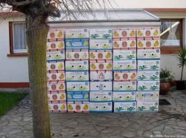 carton-banane-rodolphe-dogniaux-design-matin12