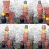 fleur-rodolphe-dogniaux-design-matin-pot-06