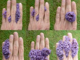 fleur-rodolphe-dogniaux-design-matin5